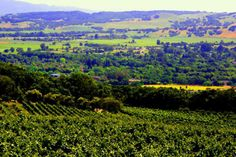 Romantic wine country retreat in East Santa Rosa  House Sitter Needed  wine country, santa rosa   sonoma,California United States  May 9,2014 For 1 WEEK | Short Term Not a member? Join today to contact homeowner sailorgary We will be gone from May 9-17th 2014. Looking for a super responsible housesitter to take care of our two orange kitties and water our outdoor garden / plants.  The house is a passive solar with full solar array and all glass facing southwest.