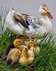 Family outing at the pond