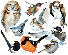 North American Birds - Collage in Watercolours