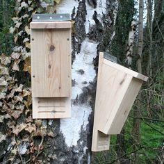This simple to make kit can be a great activity and a fun way to provide a home for your local wildlife too!This kit has been designed to be easy to assemble, yet make a strong and sturdy bat box. This can easily be put together in 10-15 minutes and would be a fantastic activity with the kids! Kit includes: 5 pieces of timber, roofing felt, self drilling screws, nails and an instruction sheet. Gloves should be worn when making this kit. Not suitable for young children. This listing is for a…