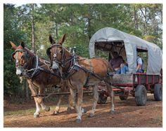 2015 Mule Wall Calendar. Courtesy: Rural Heritage. Cedar Rapids, IA (USA)