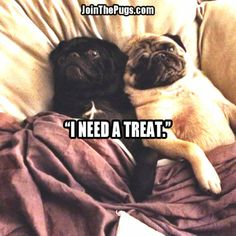 Treats Toll Booth - Join The Pugs