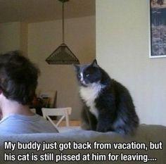MEME - Pissed cat