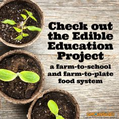 How to build an organic-rich, water-saving garden bed in poor sandy soil in a drought-ridden region. More here: http://gmoinside.org/guest-blog-kip-curtis-edible-education-project-talks-composting #soil #gardening #growyourown