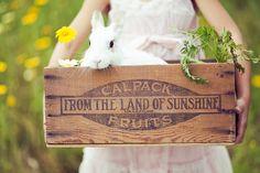 wooden vintage crate/box. caja de madera vintage. animal. friends. rabbit.
