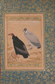 Red–Headed Vulture and Long–Billed Vulture: Leaf from the Shah Jahan Album, Mughal, period of Jahangir (1605–27), ca. 1615–20 By Mansur India Ink, opaque watercolor, and gold on paper; H. 15 3/8 in. (39.1 cm), W. 10 1/16 in. (25.6 cm) Met Museum