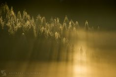 Magic forest during freezing cold morning. Freezing Cold, Magic Forest, Dandelion, Nature, Flowers, Plants, Photos, Flora, Nature Illustration