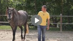 Zirkusschule Teil 2: Stillstehen & freies Rückwärtsrichten Riding Helmets, Connection, Horses, Videos, Animals, Andalusian Horse, Horseback Riding, Animales, Animaux
