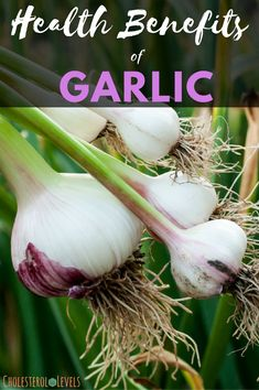 The natural health benefits of garlic are numerous. Garlic has been used as a medicinal herb for centuries. Cholesterol In Chicken, Cholesterol Lowering Foods, Cholesterol Levels, Cold Home Remedies, Natural Remedies, Avocado Health Benefits, Natural Kitchen, Medical Prescription, Good Fats