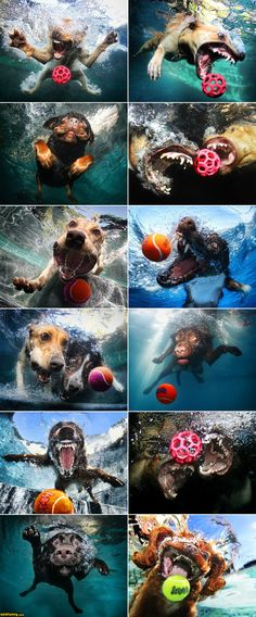 under water dog photography. Crazy Funny Pictures, Funny Animal Pictures, Funny Photos, Amazing Pictures, Cute Puppies, Cute Dogs, Dogs And Puppies, Awesome Dogs, Doggies