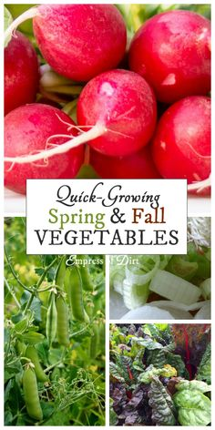 Many cool-weather veggies are also fast-growing. Find out what you can grow in your garden.