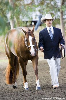 Attention to detail is critical when you're competing in showmanship. Follow these tips for maneuvering the patterns during a class.