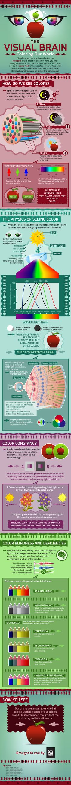 Ever wonder how we see color? Take a look at this info graphic which explains how our eyes and brain see color and the various conditions of color blindness.