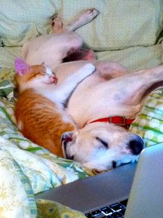 Dog and kitten... Best friends