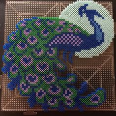 Peacock --- perler beads by @tmm6119
