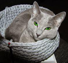 Puikkoi ja Koukkui: Pitsisukat -Kauneimmat Neulemallit Pillows, Cats, Animals, Gatos, Animales, Animaux, Animal, Cushions, Cat