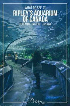 In this post we share tips on what to see at Ripley's Aquarium of Canada a popul… In this post we share tips on what to see at Ripley's Aquarium of Canada a popular attraction in downtown Toronto for those seeking to enjoy the underwater world. Toronto Zoo, Toronto Travel, Downtown Toronto, Hotels Toronto Canada, Toronto Cn Tower, Travel Portland, Celine Dion, Toronto Aquarium, Ripleys Aquarium Toronto