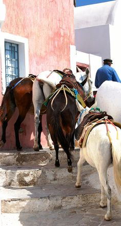 The Mules of Santorini, Greece