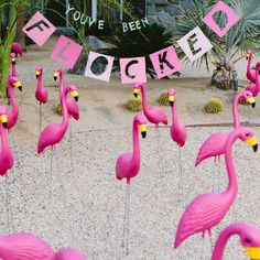 Make an epic April Fool's Day prank by placing pink flamingos in someone's lawn. Learn how to make the sign here.