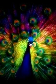 Ok, @Alisa Bobzien Bobzien Bobzien Garabo Bryant, I know it's not jewelry, but I couldn't help but think of you!✯ Peacock ✯