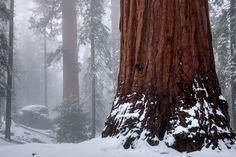 Winter Storm, Kings Canyon, 2012