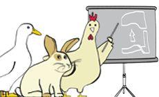 Omlet - database on chicken, rabbit, ducks, bees (breeds)
