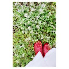 @if_its_rainy_tomorrow_