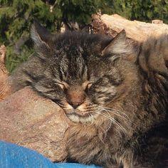 Bisogna godersi ogni momento di sole , e #Tony ci riesce benissimo ♡  Buon inizio di #primavera :-)   Dolci Sogni a-mici !  #Buonanotte !   #Goodnight #Sleeptime #sleep #catsofinstagram #cats #instacat #cutecats #sweetcats #lovelovelove #lovecat #cats #pets #animals #ilmiogatto  #photooftheday #ilovemycat #nature #catoftheday #lovecats   #catsmylove #gatti #dolcigatti #dolcicuccioli #ioamoglianimali #MIAO :-)