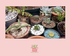 Dale un toque encantador a tus cactus y suculentas cubriendo la tierra de sus macetas con piedritas o arena de colores.