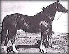 Joe Reed  Quarter Horse
