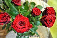 Låt Oss Binda Din Bukett.Vi har vettiga priser, personlig service, färska blommor och ambient som inspirerar. Världens Blommor Norra Långgatan 16 Landskrona 0418651159