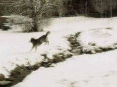 Keshet Kennels/Rescue - The First Snowfall