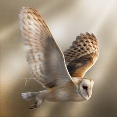 british birds in flight - Google Search