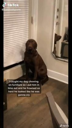 Funny Animal Jokes, Funny Dog Memes, Funny Dog Videos, Really Funny Memes, Funny Animal Pictures, Animal Humor, Cute Funny Dogs, Cute Funny Animals, Tierischer Humor