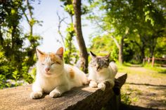 Cats who lives in Kyoto