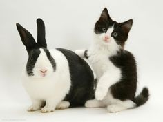 spotted Rabbit wallpapers and images wallpapers pictures photos