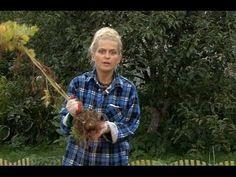 Все о выращивании картофеля. УБОРКА И ХРАНЕНИЕ КАРТОФЕЛЯ. Часть 6 - YouTube