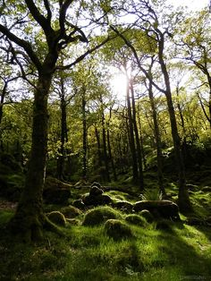 Trees on the ennerdale ramble under Castle Crag. Photo by my hubby.(5) Tumblr