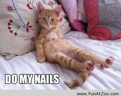 Funny sitting cat - Funny Picture