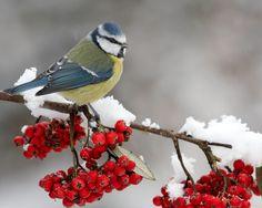 Изображение со страницы http://hq-wallpapers.ru/wallpapers/12/hq-wallpapers_ru_animals_55311_1280x1024.jpg.