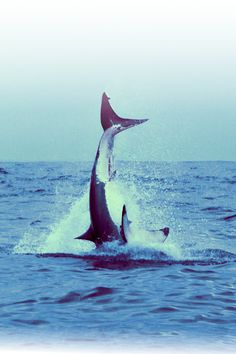 """""""Bravery is the capacity to perform properly even when scared half to death."""" ~ Omar Bradley http://www.sharkcagediving.co.za"""