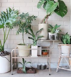 Love this mix of plants and pots against a painted brick wall.