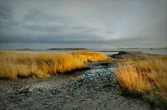 This is a seascape of Calf Pasture Beach in Norwalk, Connecticut at dusk.  The beautiful light of the late afternoon sun cascades it's aura over the seagrass and sand at low tide leaving way to a beautiful photographic capture.  This photograph is on sale at Fine Art America. #beach #norwalkconnecticut #lowtide #dusk #sunsetinnorwalk