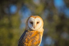Look into my eyes by Daniela Duncan on 500px