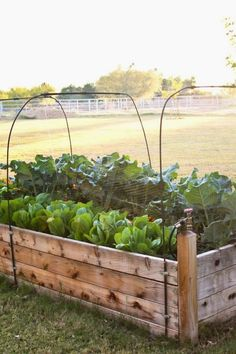 50 Easy DIY Raised Garden Bed Ideas To Try Raised Garden Bed Ideas Design No. 5403 #gardening #raised_garden_beds #garden_designs
