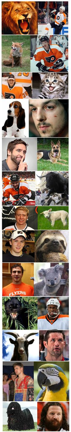 The Flyers' animal counterparts. Quite accurate, though I admit I've always seen Hartnell more as an Irish Water Spaniel than a Komondor.