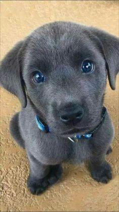 Super Cute Puppies, Baby Animals Super Cute, Cute Baby Dogs, Cute Little Puppies, Cute Dogs And Puppies, Cute Little Animals, Cute Funny Animals, Cute Cats, Doggies