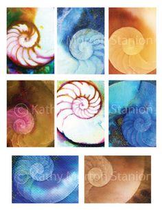 Aceo Nautilus Shells  No 1  Instant Digital by Kathy Morton Stanion