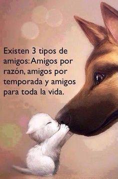 Amigos /friends