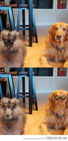 """Colonel Meow faceswap…I need to make a """"spit beverage out my nose"""" board. Holy LOL."""